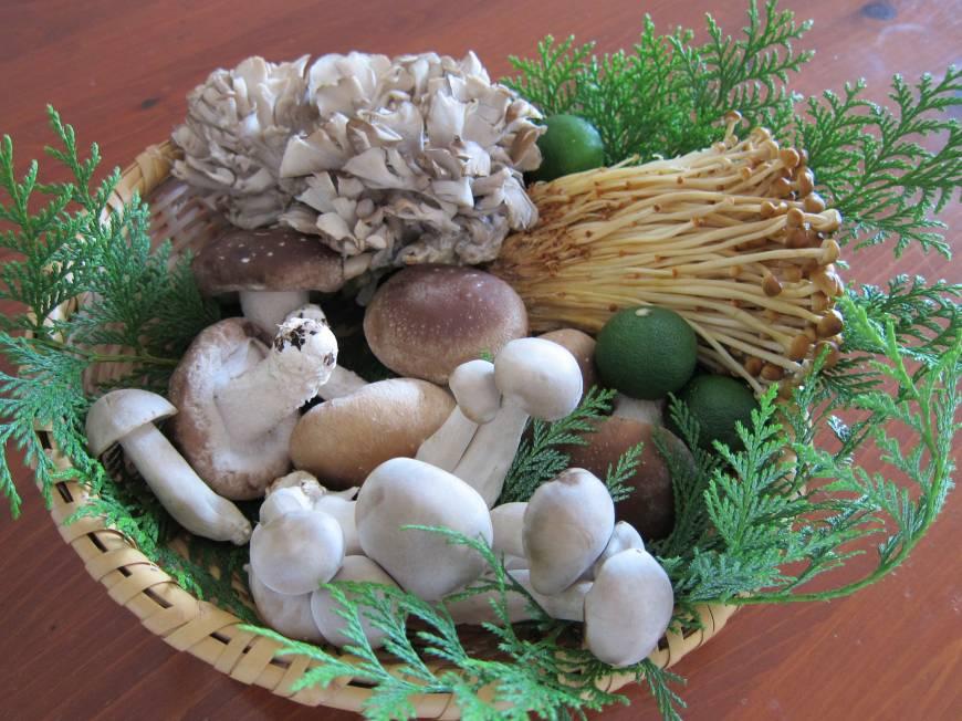 Cách bảo quản nấm tươi ngon, giữ nguyên hương vị
