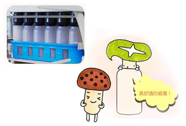 Nấm hokto từ Nhật Bản - nấm tươi cho sức khỏe