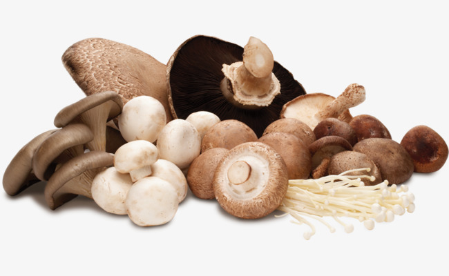 Dồi dào vitamin D từ nấm tươi(2)