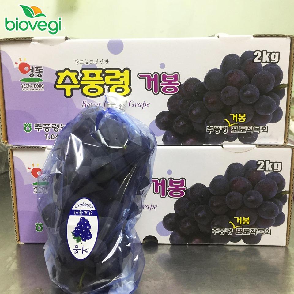 Nho đen Kyoho Hàn Quốc