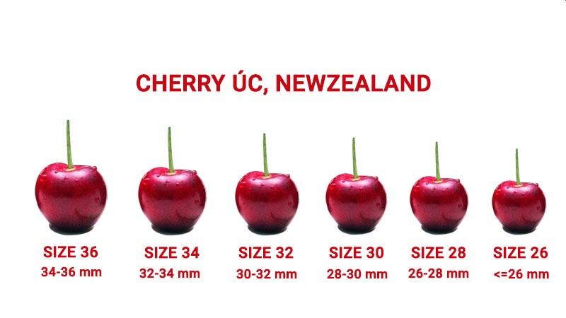 Mùa cherry Úc nhâp khẩu